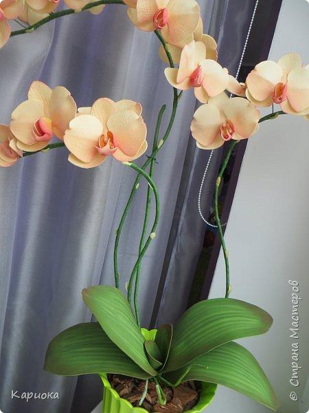 Всем привет! И снова орхидеи! Еще один кустик. фото 3