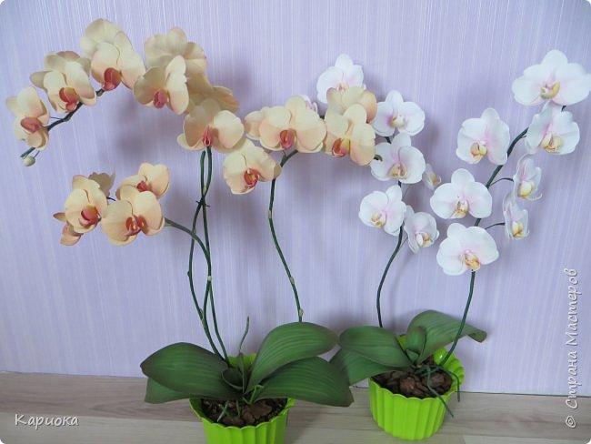 Всем привет! И снова орхидеи! Еще один кустик. фото 9