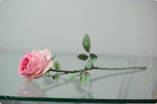 Здравствуйте жители страны! На этот раз розы. И немного фото из моего интервью по керамической флористике! Пионовидная роза, спасибо Инне Голубевой за мастер-класс и вдохновение!!!!!! фото 5