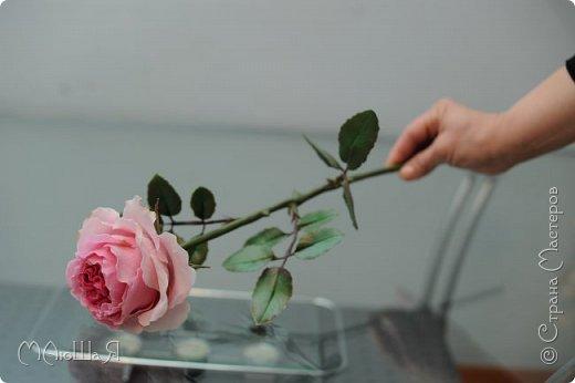 Здравствуйте жители страны! На этот раз розы. И немного фото из моего интервью по керамической флористике! Пионовидная роза, спасибо Инне Голубевой за мастер-класс и вдохновение!!!!!! фото 6