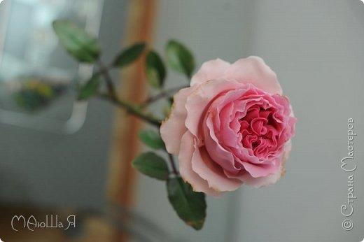 Здравствуйте жители страны! На этот раз розы. И немного фото из моего интервью по керамической флористике! Пионовидная роза, спасибо Инне Голубевой за мастер-класс и вдохновение!!!!!! фото 7