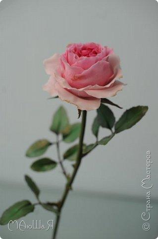 Здравствуйте жители страны! На этот раз розы. И немного фото из моего интервью по керамической флористике! Пионовидная роза, спасибо Инне Голубевой за мастер-класс и вдохновение!!!!!! фото 8