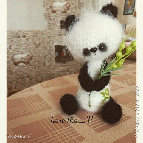 Панда фото 1