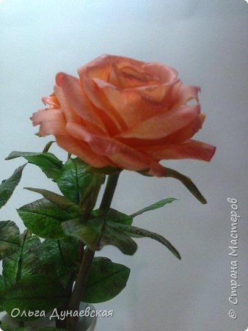 Здравствуйте жители страны мастеров.Полноразмерные розы в подарок.Очень старалась. фото 2