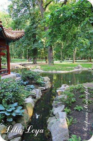 Совсем недавно я приглашала вас на прогулку в Тридевятое царство к Их Величествам павлинам   https://stranamasterov.ru/node/1085754 А сейчас предлагаю заглянуть в Китайский уголок и полюбоваться редкой птичкой с красивым названием мандаринка. фото 30