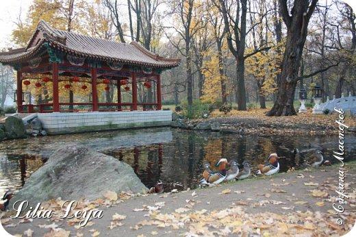 Совсем недавно я приглашала вас на прогулку в Тридевятое царство к Их Величествам павлинам   http://stranamasterov.ru/node/1085754 А сейчас предлагаю заглянуть в Китайский уголок и полюбоваться редкой птичкой с красивым названием мандаринка. фото 7