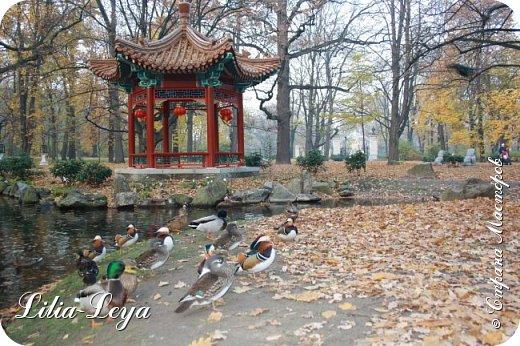 Совсем недавно я приглашала вас на прогулку в Тридевятое царство к Их Величествам павлинам   http://stranamasterov.ru/node/1085754 А сейчас предлагаю заглянуть в Китайский уголок и полюбоваться редкой птичкой с красивым названием мандаринка. фото 8