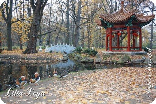 Совсем недавно я приглашала вас на прогулку в Тридевятое царство к Их Величествам павлинам   https://stranamasterov.ru/node/1085754 А сейчас предлагаю заглянуть в Китайский уголок и полюбоваться редкой птичкой с красивым названием мандаринка. фото 9