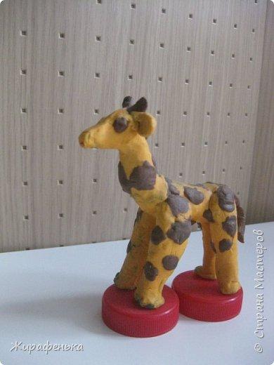"""Этих милых жирафиков я сделала из набора для творчества """" Дружочки из горшочка"""". Одна парочка была подарена моему первому воспитаннику Илюше на 16лет,а другая осталась жить у меня.На фото №2 можно посмотреть как выглядит набор.На последнем фото №9 жираф из пластилина, сделанный Ильёй в 8лет, он долгожитель,напоминает нам о детстве. фото 9"""