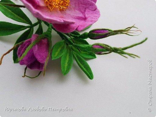 Веточка розового шиповника.  фото 3