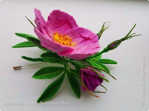 Веточка розового шиповника.  фото 1