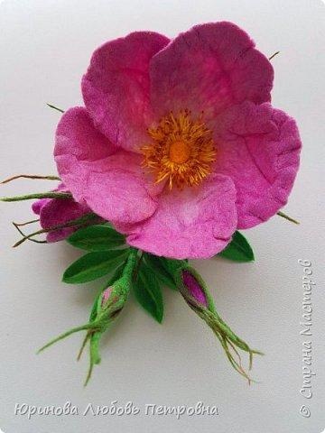Веточка розового шиповника.  фото 2