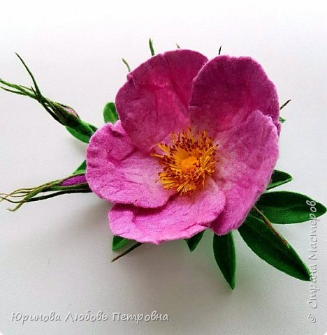 Веточка розового шиповника.  фото 4