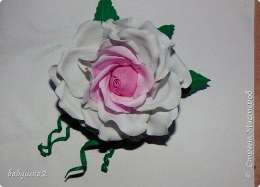 Привет, жители СМ. Вот хочу поделиться своими цветочками с вами. фото 1