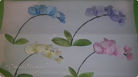 Орхидеи. фото 2
