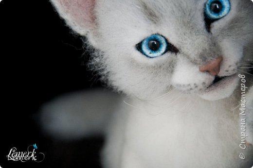 Аквамарин. Валяный невский-маскарадный котенок фото 1