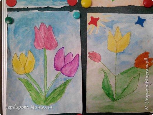 Тюльпаны Шренки(крымские тюльпаны) фото 3