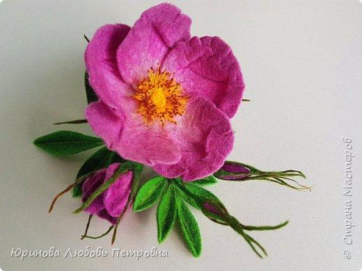 Веточка розового шиповника.  фото 5