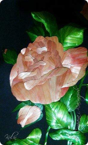 Розы... Розовые розы... Мечты... Грезы... И...Розы! фото 2