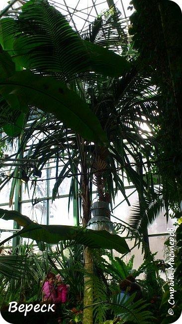 """Ботанический сад МГУ""""Аптекарский огород"""". 5 марта 2017 год.  VIII фестиваль орхидей, хищных растений и растений пустынь  , посвящённый 180-летию окончания легендарного кругосветного путешествия Чарльза Дарвина на корабле «Бигль», учёный известен также своей любовью к орхидеям . фото 7"""