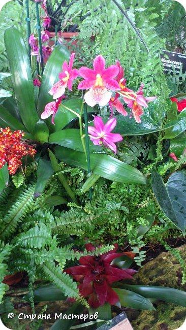 """Ботанический сад МГУ""""Аптекарский огород"""". 5 марта 2017 год.  VIII фестиваль орхидей, хищных растений и растений пустынь  , посвящённый 180-летию окончания легендарного кругосветного путешествия Чарльза Дарвина на корабле «Бигль», учёный известен также своей любовью к орхидеям . фото 2"""