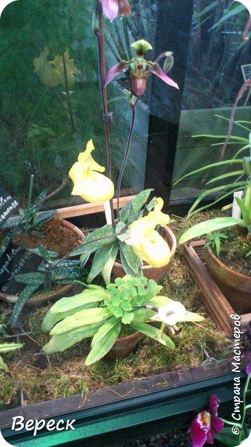 """Ботанический сад МГУ""""Аптекарский огород"""". 5 марта 2017 год.  VIII фестиваль орхидей, хищных растений и растений пустынь  , посвящённый 180-летию окончания легендарного кругосветного путешествия Чарльза Дарвина на корабле «Бигль», учёный известен также своей любовью к орхидеям . фото 9"""