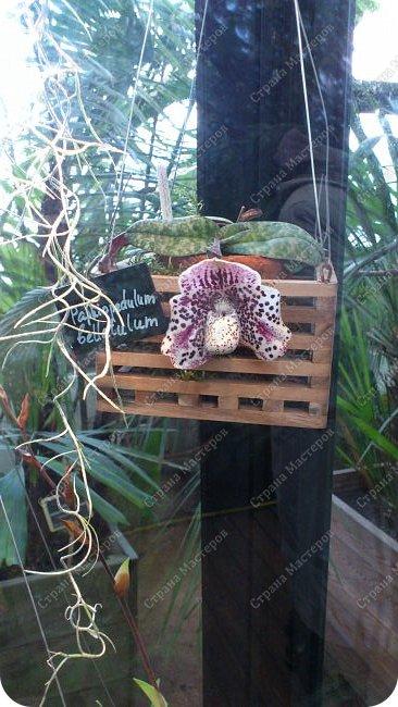 """Ботанический сад МГУ""""Аптекарский огород"""". 5 марта 2017 год.  VIII фестиваль орхидей, хищных растений и растений пустынь  , посвящённый 180-летию окончания легендарного кругосветного путешествия Чарльза Дарвина на корабле «Бигль», учёный известен также своей любовью к орхидеям . фото 11"""
