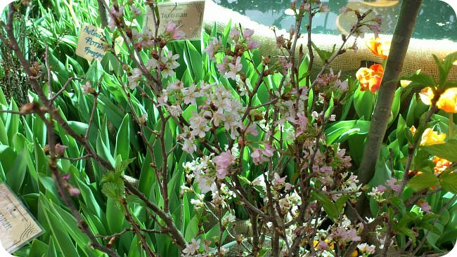 """Ботанический сад МГУ""""Аптекарский огород"""". 5 марта 2017 год.  VIII фестиваль орхидей, хищных растений и растений пустынь  , посвящённый 180-летию окончания легендарного кругосветного путешествия Чарльза Дарвина на корабле «Бигль», учёный известен также своей любовью к орхидеям . фото 20"""
