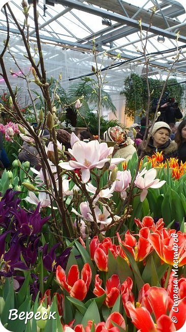 """Ботанический сад МГУ""""Аптекарский огород"""". 5 марта 2017 год.  VIII фестиваль орхидей, хищных растений и растений пустынь  , посвящённый 180-летию окончания легендарного кругосветного путешествия Чарльза Дарвина на корабле «Бигль», учёный известен также своей любовью к орхидеям . фото 23"""