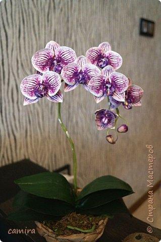 Привет) Я опять с орхидейкой. .. фото 2