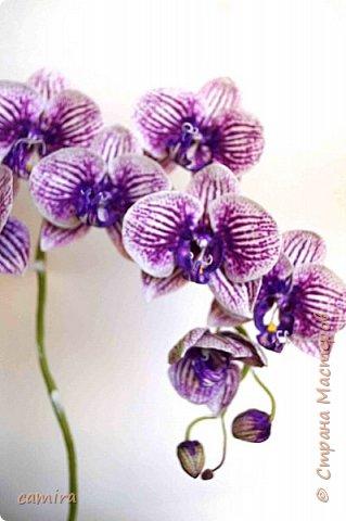 Привет) Я опять с орхидейкой. .. фото 3