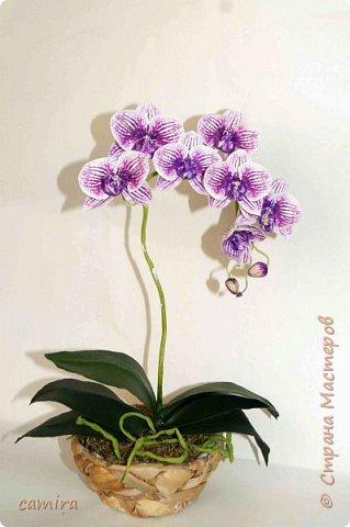 Привет) Я опять с орхидейкой. .. фото 1