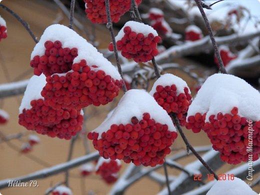""""""" На чисто-белом покрывале снега, рябины красной куст огнём горит...  фото 1"""