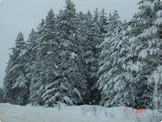 """"""" На чисто-белом покрывале снега, рябины красной куст огнём горит...  фото 6"""