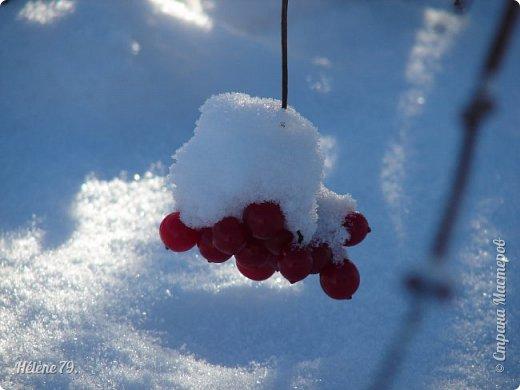""""""" На чисто-белом покрывале снега, рябины красной куст огнём горит...  фото 7"""
