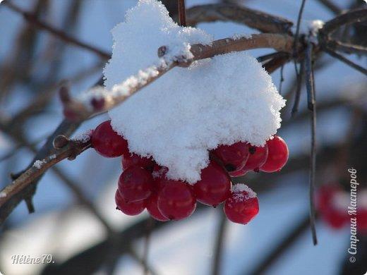 """"""" На чисто-белом покрывале снега, рябины красной куст огнём горит...  фото 9"""