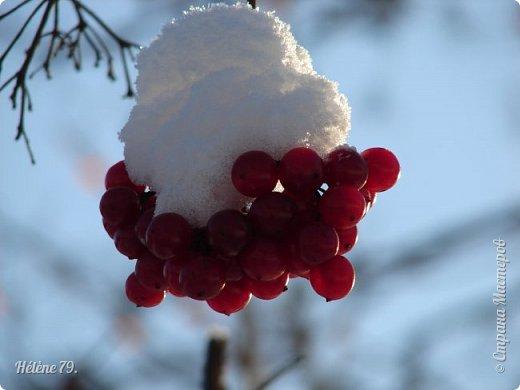 """"""" На чисто-белом покрывале снега, рябины красной куст огнём горит...  фото 11"""