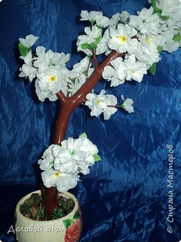 Сакура, дерево мыслей, воспоминаний, сожалений, радости, желаний. фото 1