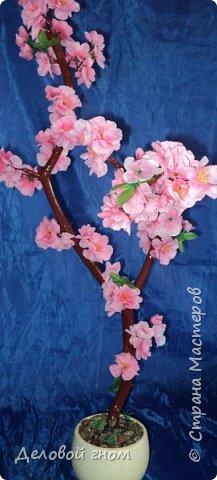 Сакура, дерево мыслей, воспоминаний, сожалений, радости, желаний. фото 3