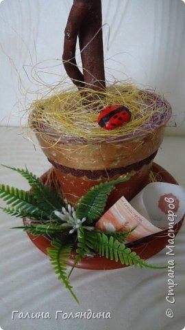 Денежное деревце . фото 3