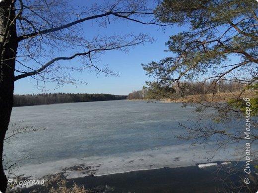 Погода отличная: тепло и солнечно! В наши края пришла настоящая весна! Небо чистое, ярко-голубое и очень высокое! Отправились на прогулку, подышать свежим воздухом, послушать и посмотреть как оживает природа...  Еловый лес встретил нас довольно сумрачно. фото 13