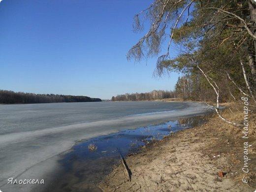 Погода отличная: тепло и солнечно! В наши края пришла настоящая весна! Небо чистое, ярко-голубое и очень высокое! Отправились на прогулку, подышать свежим воздухом, послушать и посмотреть как оживает природа...  Еловый лес встретил нас довольно сумрачно. фото 14