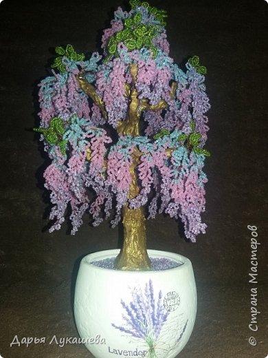 Глици́ния (от греч. γλυκός — сладкий), или висте́рия (лат. Wistéria) — род высоких древовидных вьющихся субтропических растений из семейства Бобовые с крупными кистями душистых лиловых цветков. (Материал из Википедии) фото 1