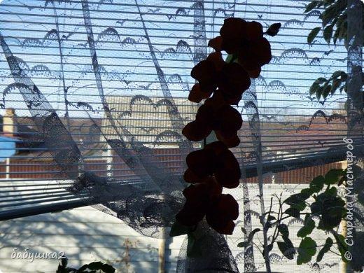 привет Всем! Вот решила немного украсить окна... фото 3