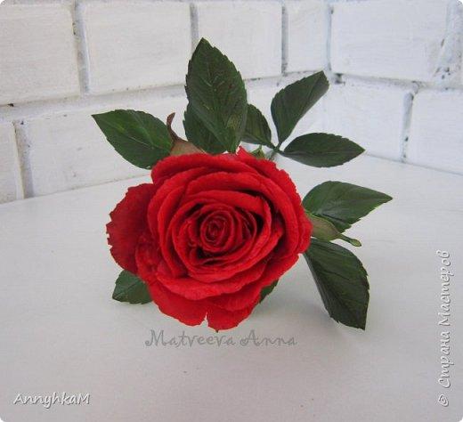 Добрый вечер, страна! Думала не буду больше делать розы, примитивные они у меня получались. Но тут оказались у меня в руках живые розочки и руки мои не смогли остановиться.  фото 1