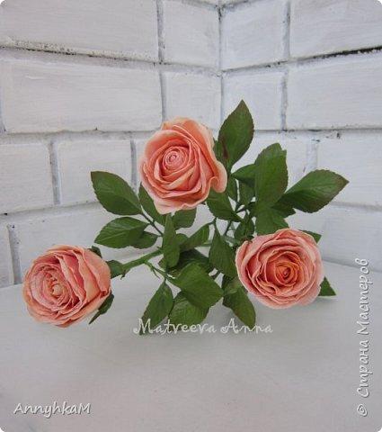Добрый вечер, страна! Думала не буду больше делать розы, примитивные они у меня получались. Но тут оказались у меня в руках живые розочки и руки мои не смогли остановиться.  фото 6
