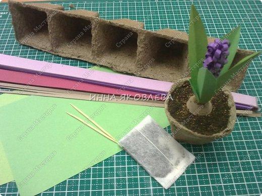 Предлагаю  просто и быстро изготовить гиацинт из бумаги. Конечно, вариант не новый, есть более сложные и  эффектные способы, но мне нужен был достаточно легкий, но, в тоже время, правдоподобный вариант для полуторачасового мастер-класса с первоклассниками.  фото 3