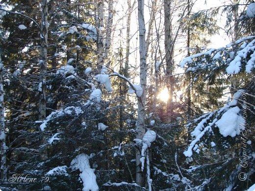 Намело, Навьюжило. Все деревья  В кружеве: Снег на соснах, На кустах, В белых шубках ели. И запутались в ветвях  Буйные метели.   (Н.Гончаров)   фото 21