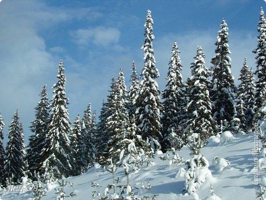 Намело, Навьюжило. Все деревья  В кружеве: Снег на соснах, На кустах, В белых шубках ели. И запутались в ветвях  Буйные метели.   (Н.Гончаров)   фото 4