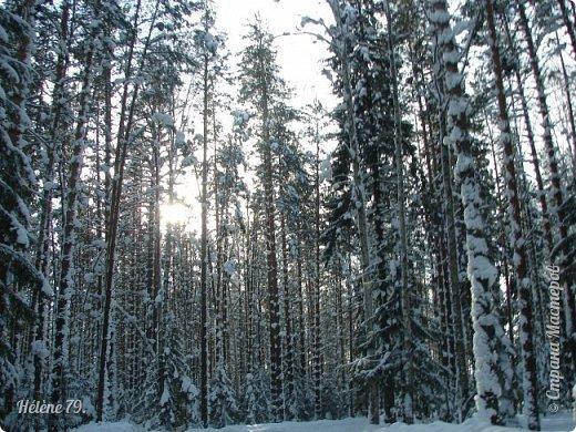 Намело, Навьюжило. Все деревья  В кружеве: Снег на соснах, На кустах, В белых шубках ели. И запутались в ветвях  Буйные метели.   (Н.Гончаров)   фото 7